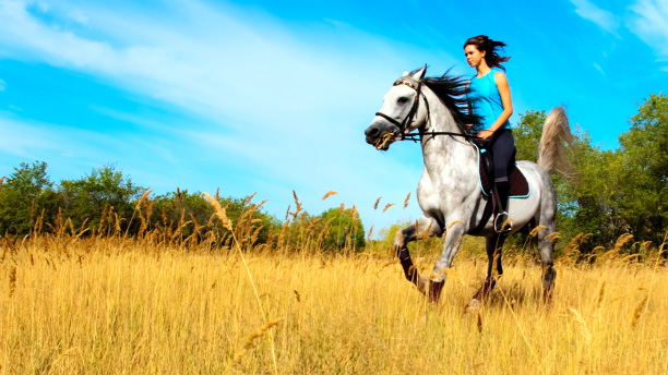 Boost Your Horse's Value For Sale