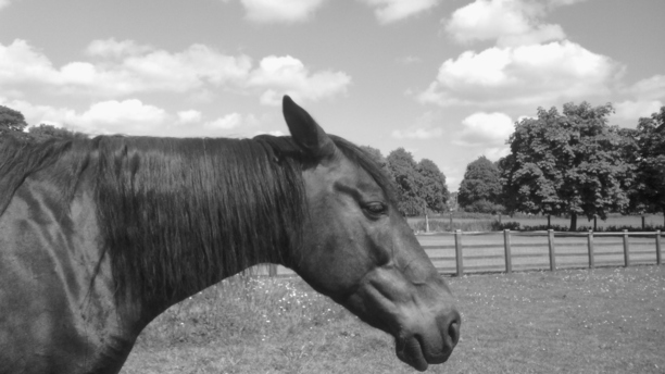 Getting to the Source of Pain - Knowing how to help your horse be healthy