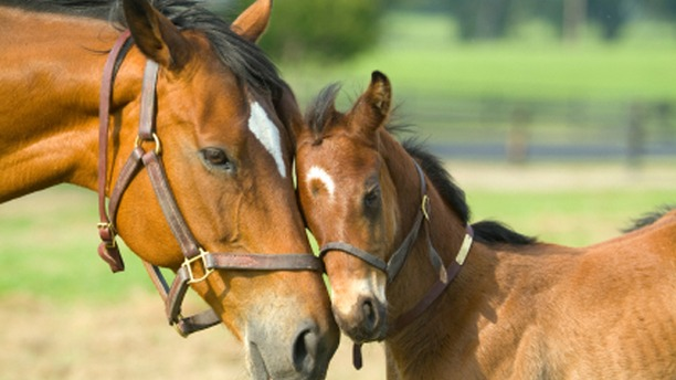 Stress-free Weaning For Your Foal