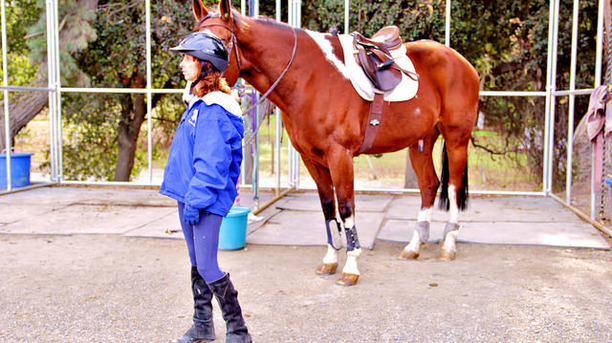 Horse Training Basics for Novices