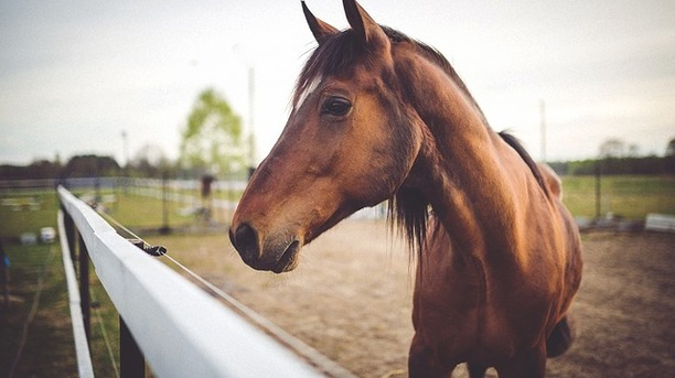 Fearing Horses: How to Get Past Equinophobia