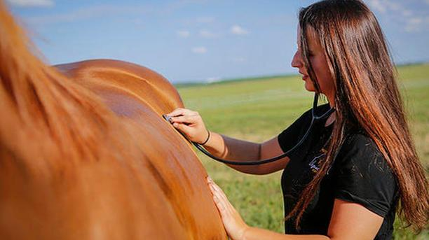 Three Vital Signs to Assure Horse's Health