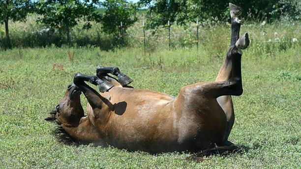 13 Bonding Hints for Horse Play
