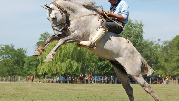 Western and English Horse Riding: What's the Difference?