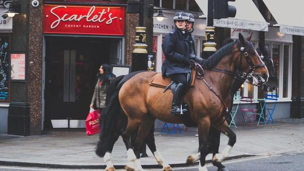 Mounted Police Units Prove to be a Valuable Division of Law Enforcement