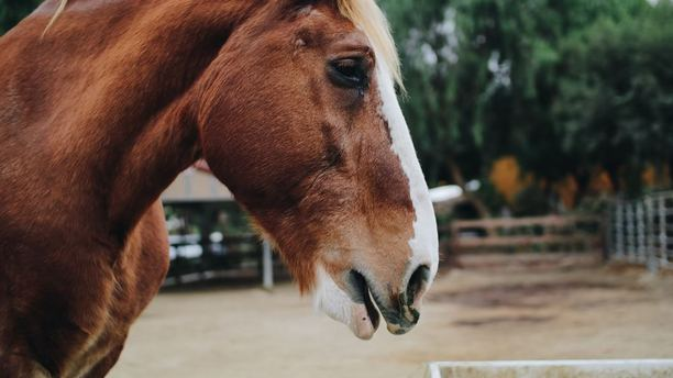 Steps to Buying Your Dream Horse