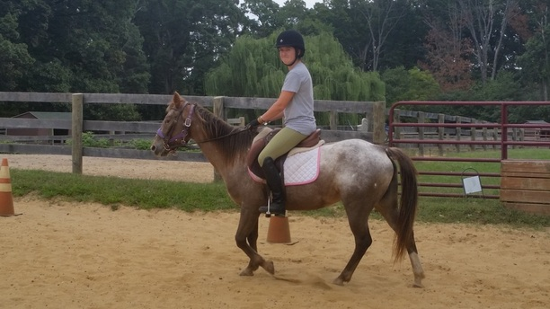 Lessons From Lesson Horses: Chapter 8