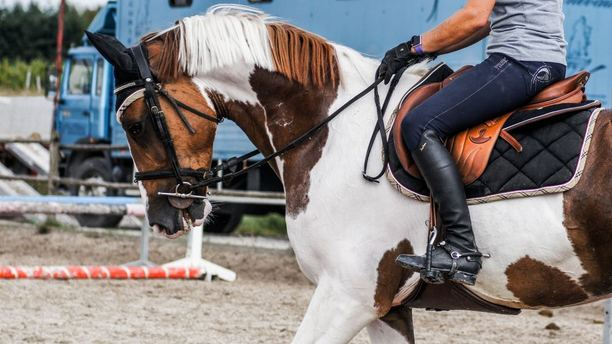 Horse Groundwork: The Foundation of All Training