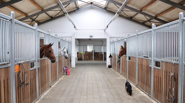 Proper Ventilation, Light, and Wireless Camera: Needed in Barn for Horse's Safety