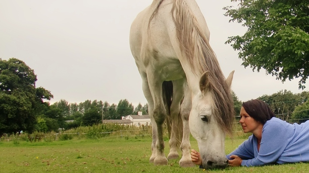 Dowsing for Horse's Health